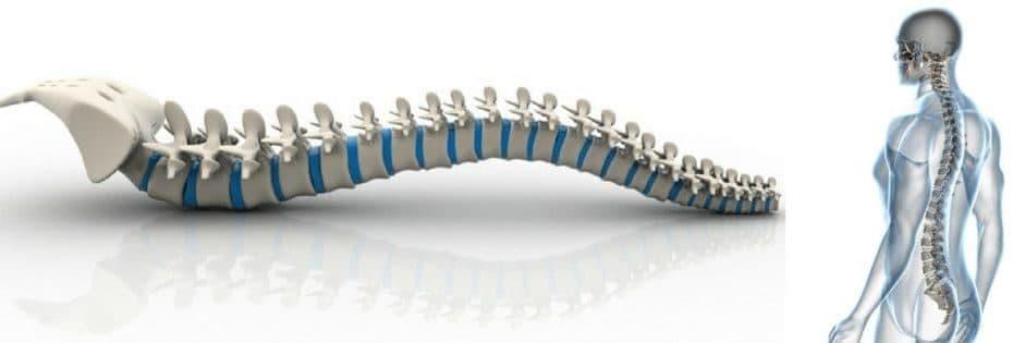 la médula espinal y la columna vertebral